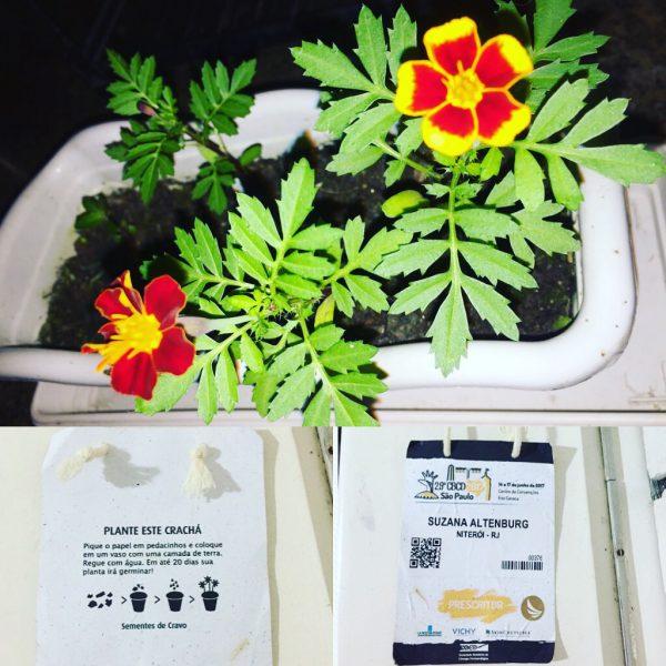 Crachá feito de papel semente, após cultivado se transformou em uma linda planta